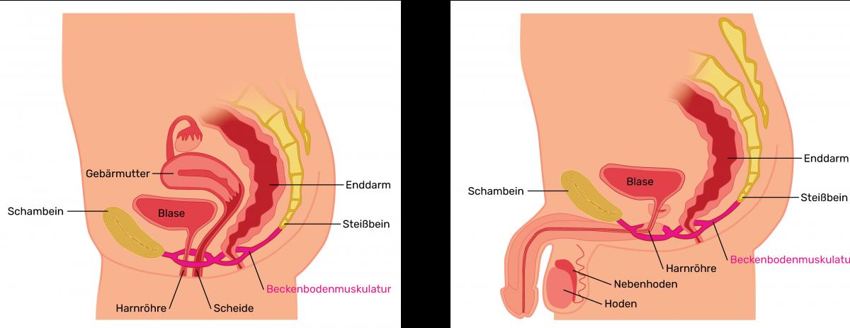 Frau scheide anatomie Vaginalverkehr